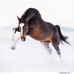 Muurkalender Paarden 2020 januari