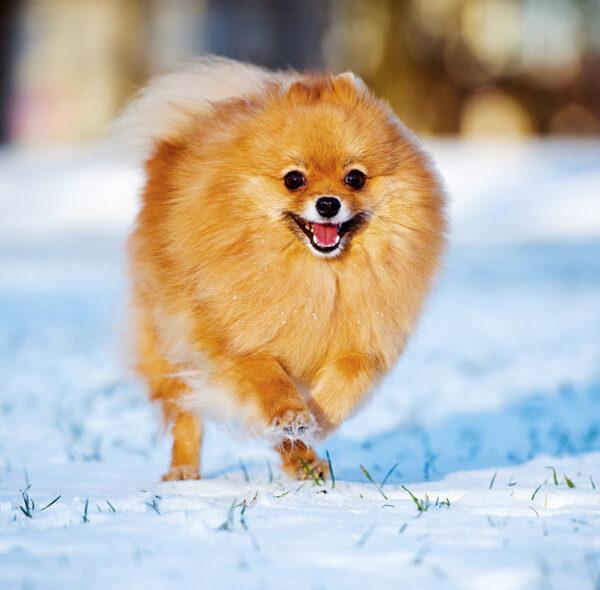 Muurkalender Honden 2020 Januari