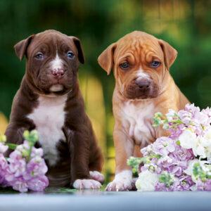 Muurkalender Honden 2020 Mei