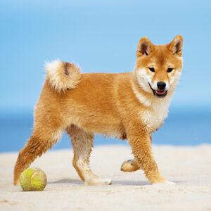 Muurkalender Honden 2020 Augustus