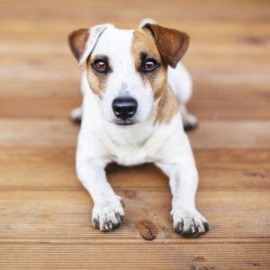 Muurkalender Honden 2020 Oktober