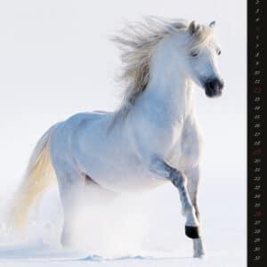 Kalender Horses Dreaming 2020 januari