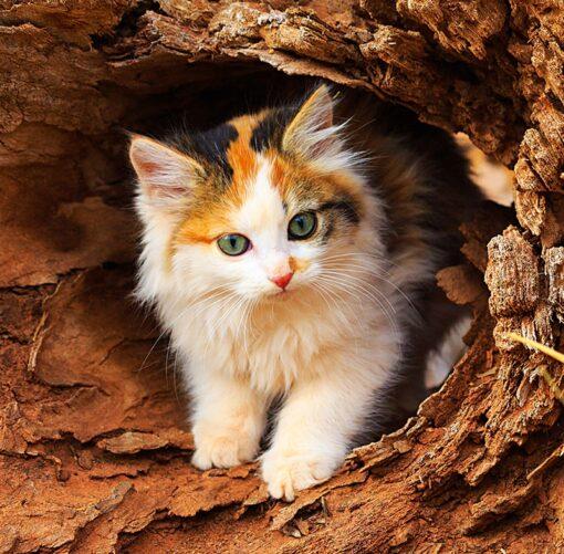 Muurkalender Cats 30x30 2021 Maart
