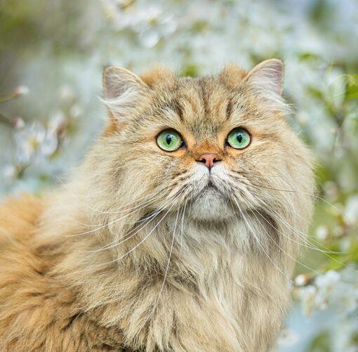 Muurkalender Cats 30x30 2021 Mei