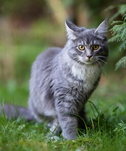 Muurkalender Cats 30x30 2021 Juni