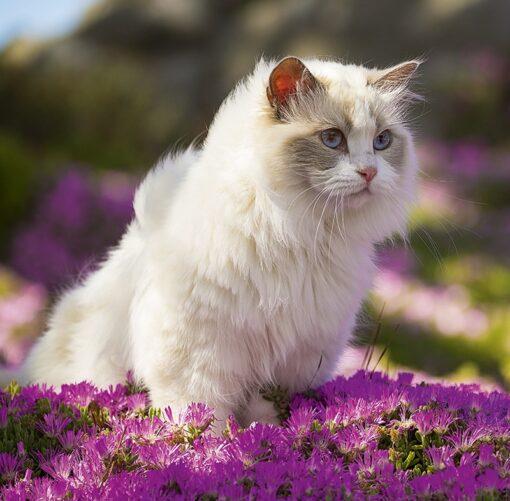 Muurkalender Cats 30x30 2021 Juli