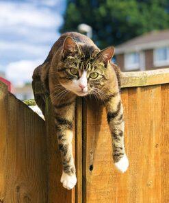 Muurkalender Cats 30x30 2021 Augustus