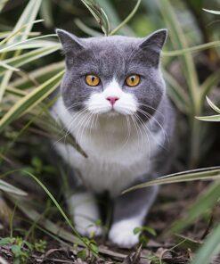 Muurkalender Cats 30x30 2021 Oktober