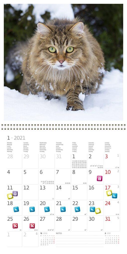 Muurkalender Cats 30x30 2021 Januari