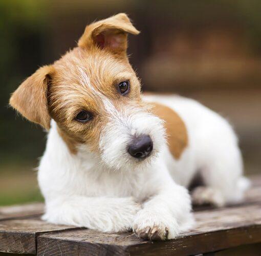 Muurkalender 30x30 Dogs 2021 Mei