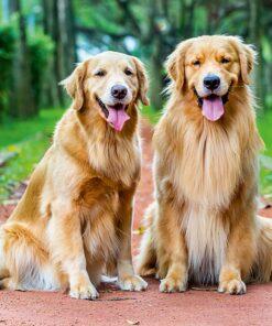 Muurkalender 30x30 Dogs 2021 September