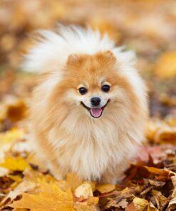 Muurkalender 30x30 Dogs 2021 Oktober