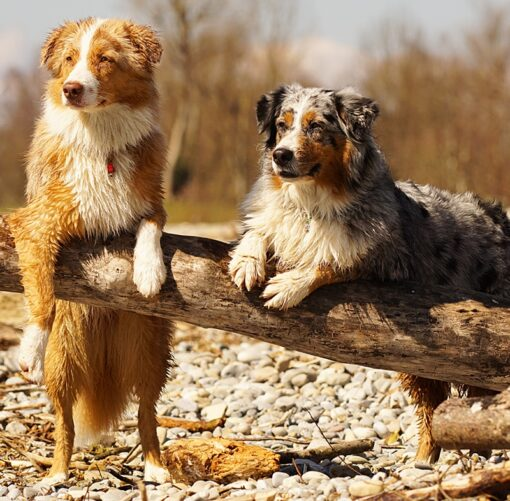 Muurkalender 30x30 Dogs 2021 November