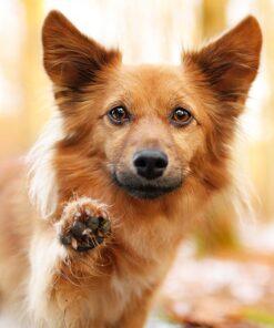 Muurkalender 30x30 Dogs 2021 December