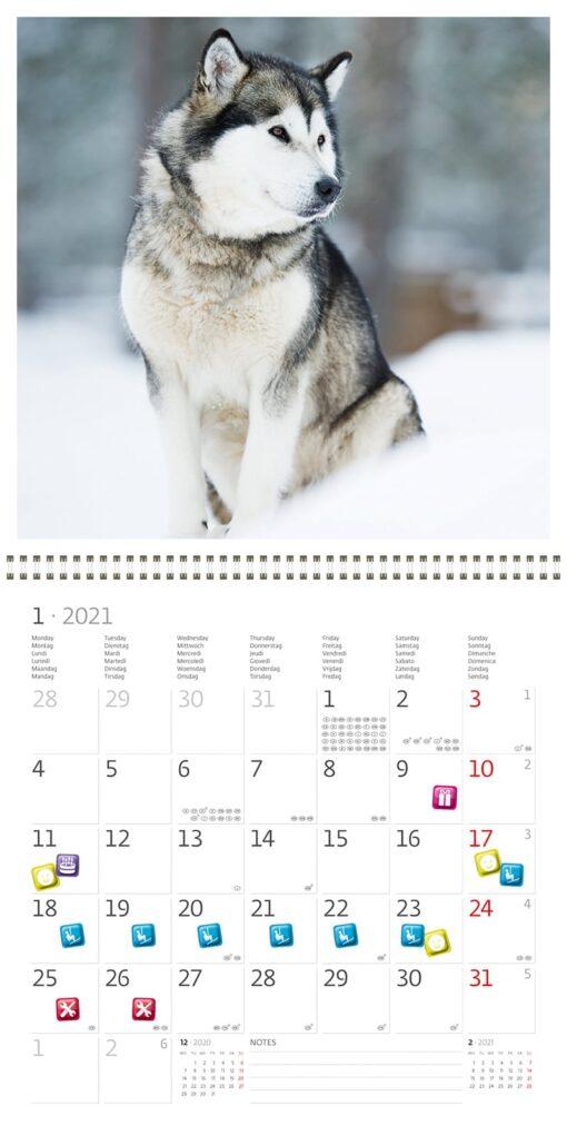 Muurkalender 30x30 Dogs 2021 Januari