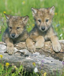 Muurkalender 30x30 Baby Animals 2021 Maart