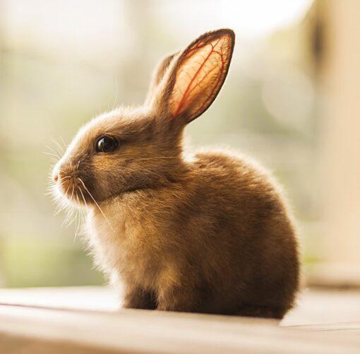Muurkalender 30x30 Baby Animals 2021 April