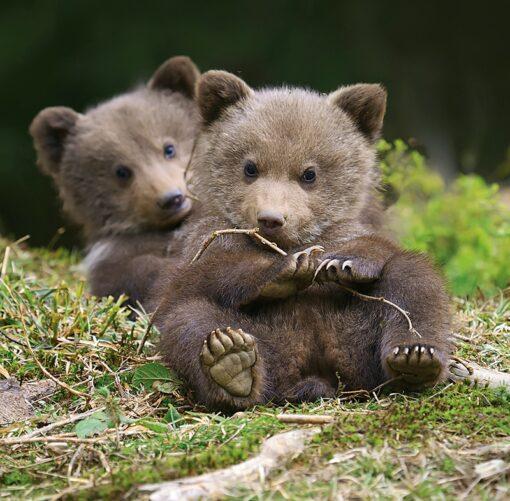 Muurkalender 30x30 Baby Animals 2021 mei