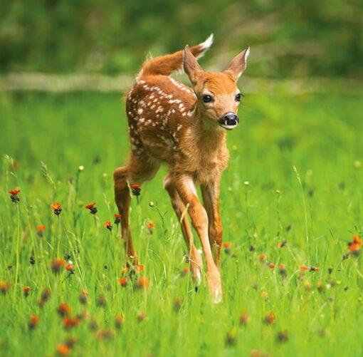 Muurkalender 30x30 Baby Animals 2021 Augustus
