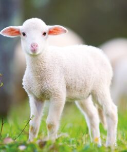 Muurkalender 30x30 Baby Animals 2021 September