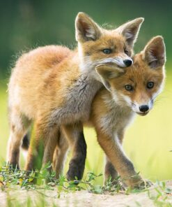 Muurkalender 30x30 Baby Animals 2021 Oktober