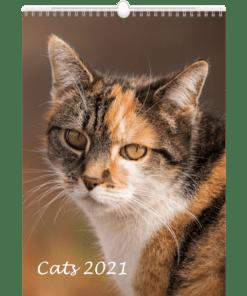 Muurkalender Cats 2021