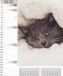 Muurkalender Cats 2021 Januari