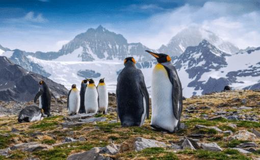 WWF kalender Wildlife 2021 januari