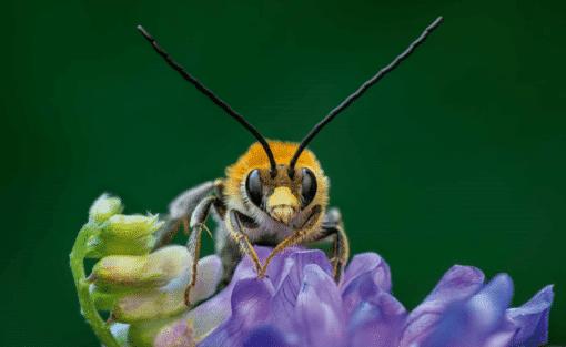 WWF kalender Wildlife 2021 April