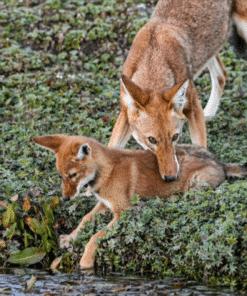 WWF kalender Wildlife 2021 Mei