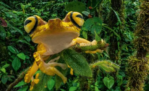 WWF kalender Wildlife 2021 Juni