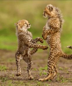 WWF kalender Wildlife 2021 Juli