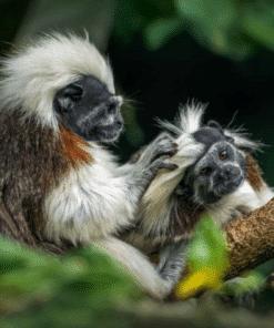 WWF kalender Wildlife 2021 September