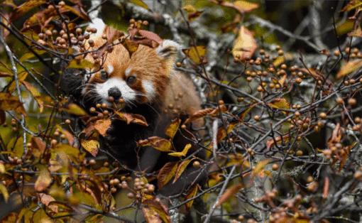 WWF kalender Wildlife 2021 Oktober