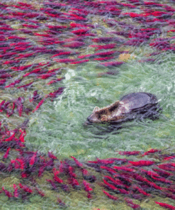 WWF kalender Wildlife 2021 November