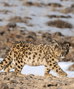 WWF kalender Wildlife 2021 December
