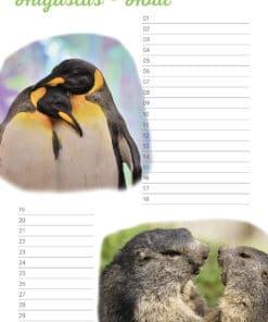 Verjaardagskalender 'Animals in Love' Augustus