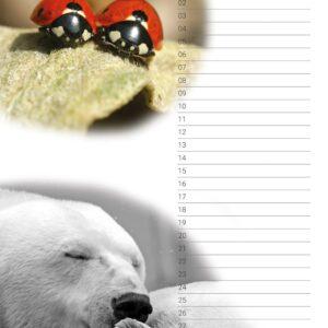 Verjaardagskalender 'Animals in Love' Februari