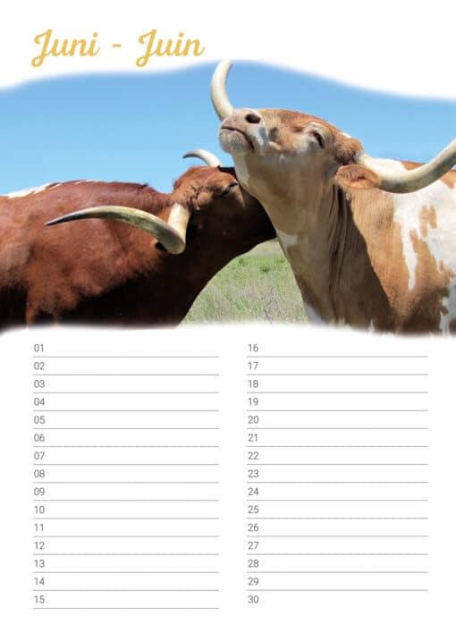 Verjaardagskalender 'Animals in Love' Juni