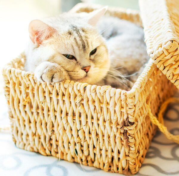 Muurkalender Cats 2022 Maart