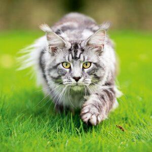 Muurkalender Cats 2022 April