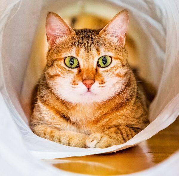 Muurkalender Cats 2022 Mei