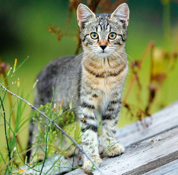 Muurkalender Cats 2022 Juni