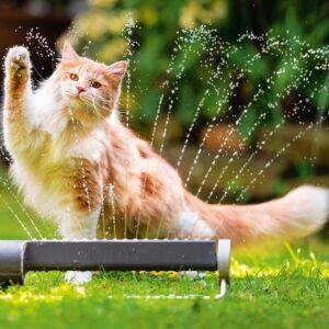 Muurkalender Cats 2022 Juli