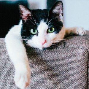 Muurkalender Cats 2022 September
