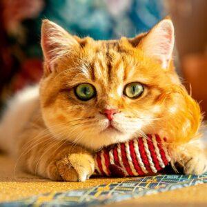 Muurkalender Cats 2022 Oktober