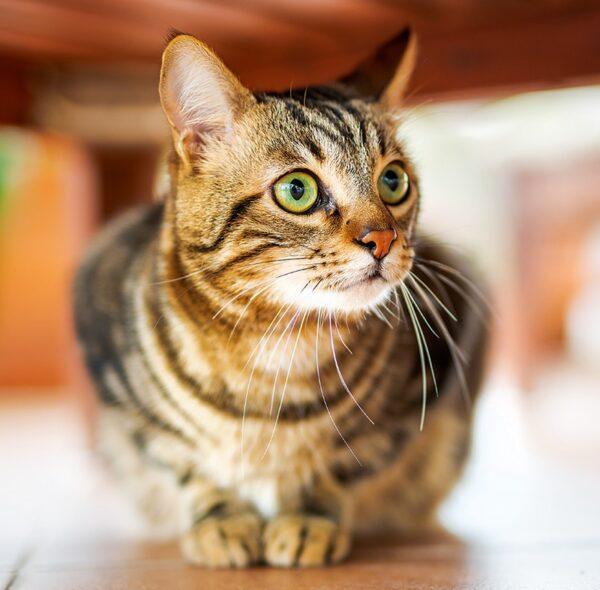 Muurkalender Cats 2022 November