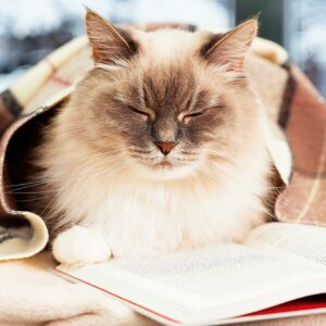 Muurkalender Cats 2022 December