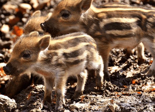 Muurkalender Animals 2022 November